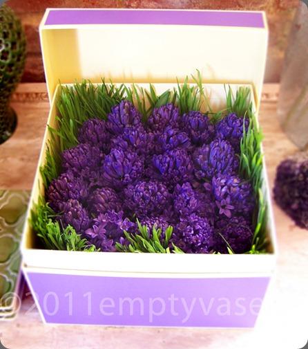 hyacinth empty vase