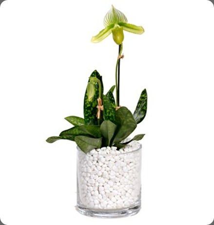 196636_10150162556721388_28184761387_8036129_5868670_n floral art