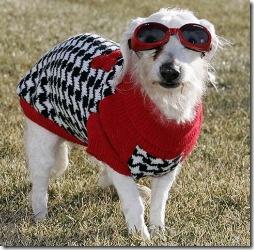 Chanel_oldest_dog