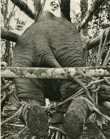 Entrenamiento de elefantes en Tailandia