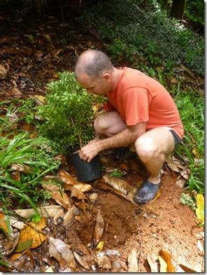 15 tree planting