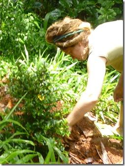 17 tree planting