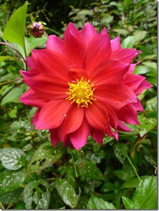 11 surprise flower