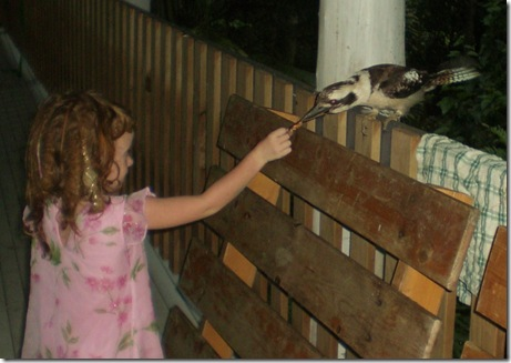 21 seq feeding kookaburra