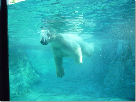 26 seaworld polar bear