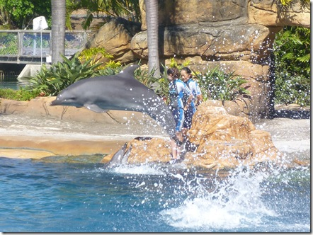 20 seaworld dolphin show