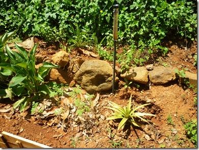 65 garden tomato herbs pineapple