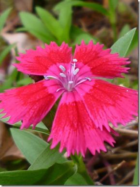 57 spring flowers