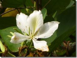 59 spring flowers