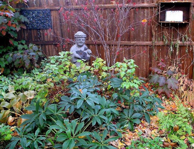 hydrangea quercifolia, leucothoe, hellebore orientalis, japanese holly fern 11/15/09