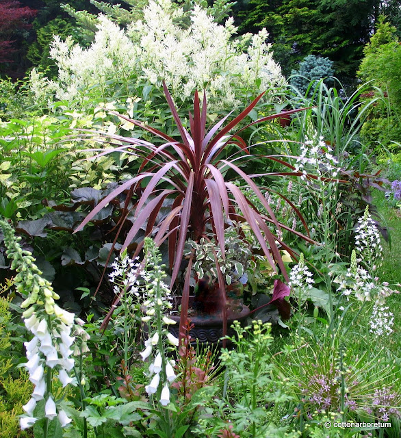 WHITE DIGITALIS AND ORNITHOGOLUM MAGNUM, fore; PERSICARIA POLYMORPHA rear