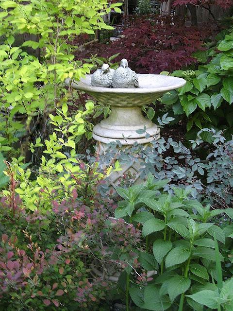 Philadelphus aurea, Acer palmatum Fireglow, Viburnum Mohawk, Rosa glauca, Monarda Mahogany, Berberis Crimson Pygmy