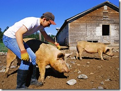 pig-farmer-400ds0622[1]