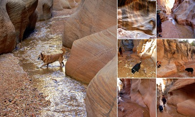 View THE WILLIS SLOT CANYON HIKE NEAR CANNONVILLE, UTAH