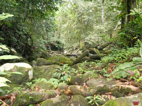 Matang Family Park 9