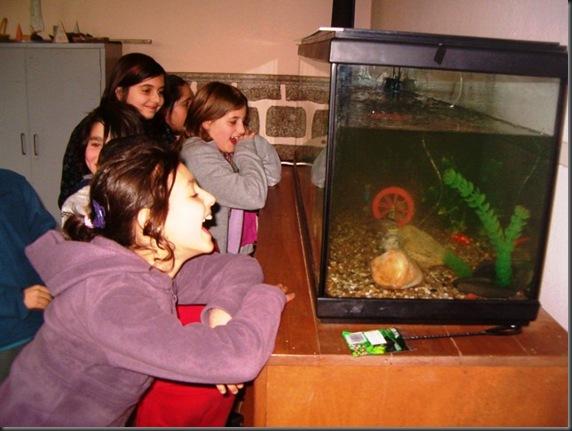 aquário 006