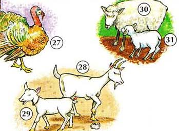 THE%20FARM%20AND%20FARM%20ANIMALS 9 <!  :en  >Picture Dictionary Online<!  :  >