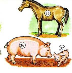 35. horse 36. pig 37. piglet