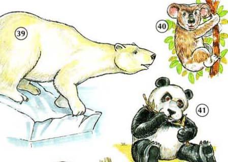 39. polar bear  40. koala (bear)  41. panda