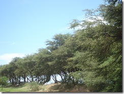 Maui 009