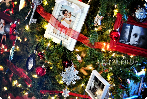 closeup tree cr
