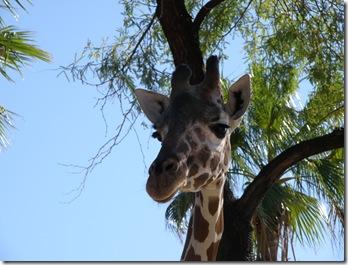 Zoo 008