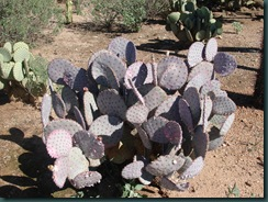 PurplyPricklyPear