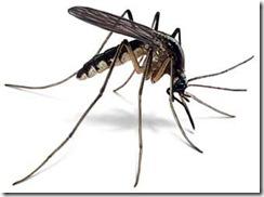 joe-mosquito