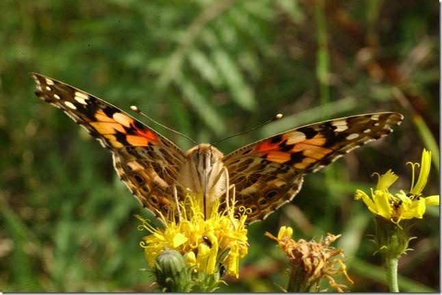 perhosia 028