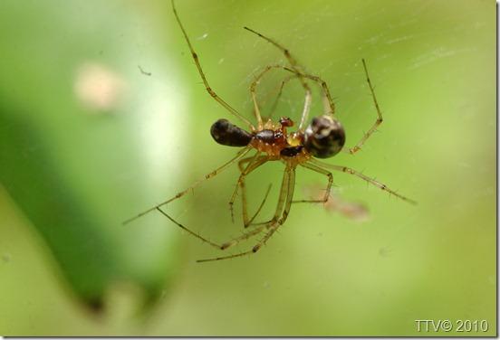hämähäkit 118