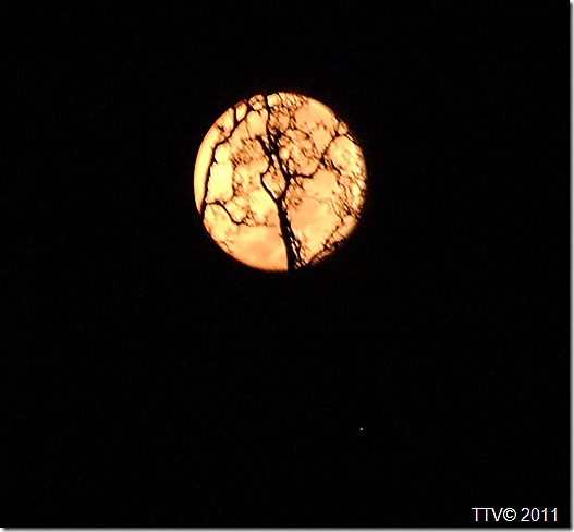 kuu 021