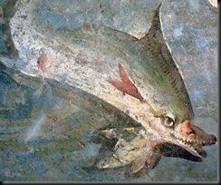 dolphin JPG