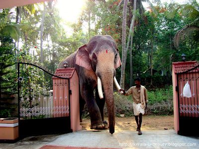 Elephants of Kerala