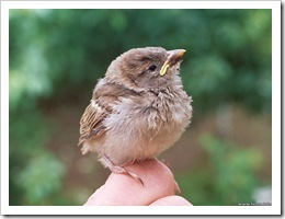 baby-bird-on-the-hand
