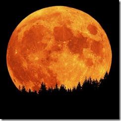 full_moon-450x450