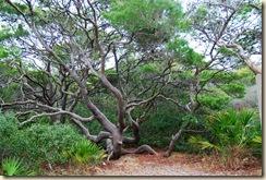 Site Tree