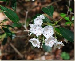 Blossom 1