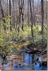 0Swampy Area