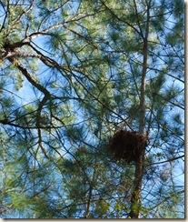 0Big Nest