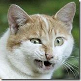 cat-WTF