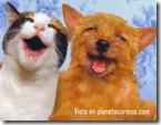 gatos-perro-amigos2