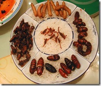 Insectos finos