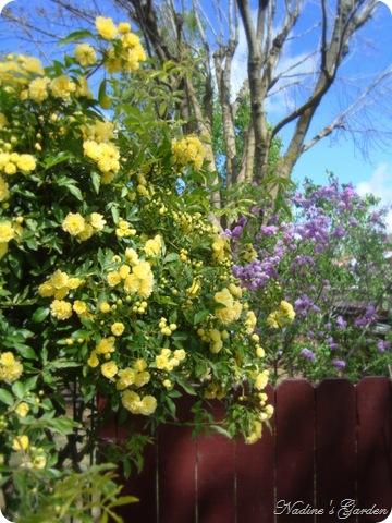 mom's garden 024