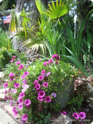 mom's garden 041