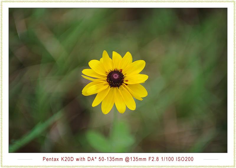 分享 DA* 50-135 F2.8 散景圖