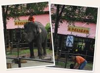 Papar gajah