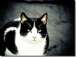 Un gran modelo el gato, se puso tras una tela negra y aproveché.