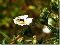 Esta abeja fue una excelente modelo