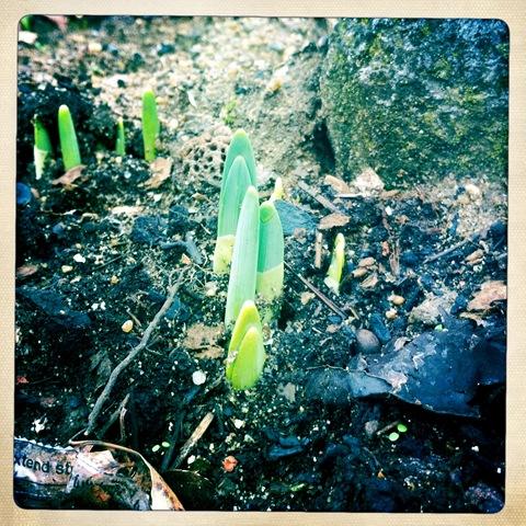 January - nature