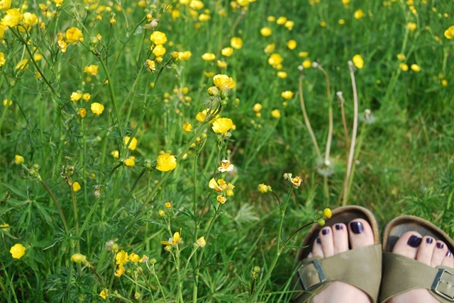 Amongst the buttercups